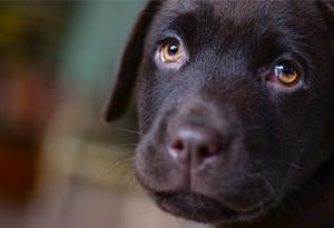puppycursus