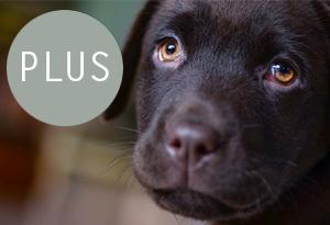 puppycursus plus