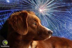 hond-vuurwerk-bang