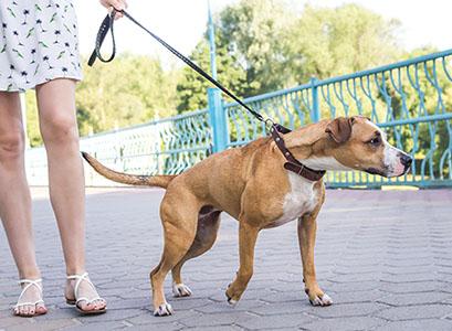 hond trekt aan lijn