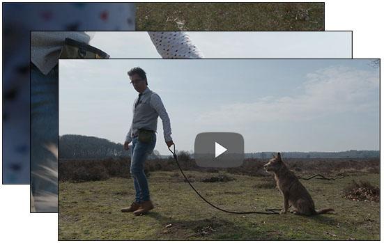 videos puppycursus