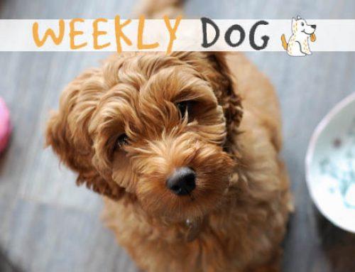 Weekly Dog: hondennieuwsbrief met positief nieuws