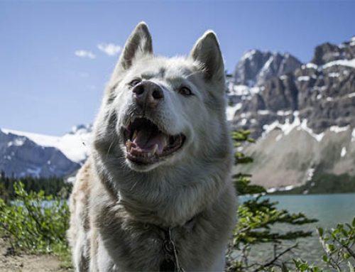 Nederlandstalige puppycursus overal ter wereld