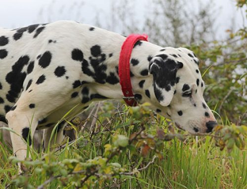 Giftige planten voor honden
