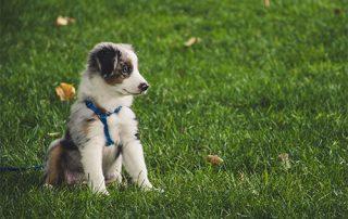 puppy Socialisatie