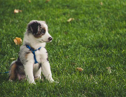 Socialisatie van je pup gebeurt niet op de hondenschool